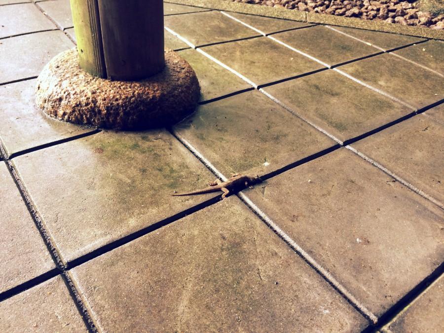 大濠公園日本庭園_09