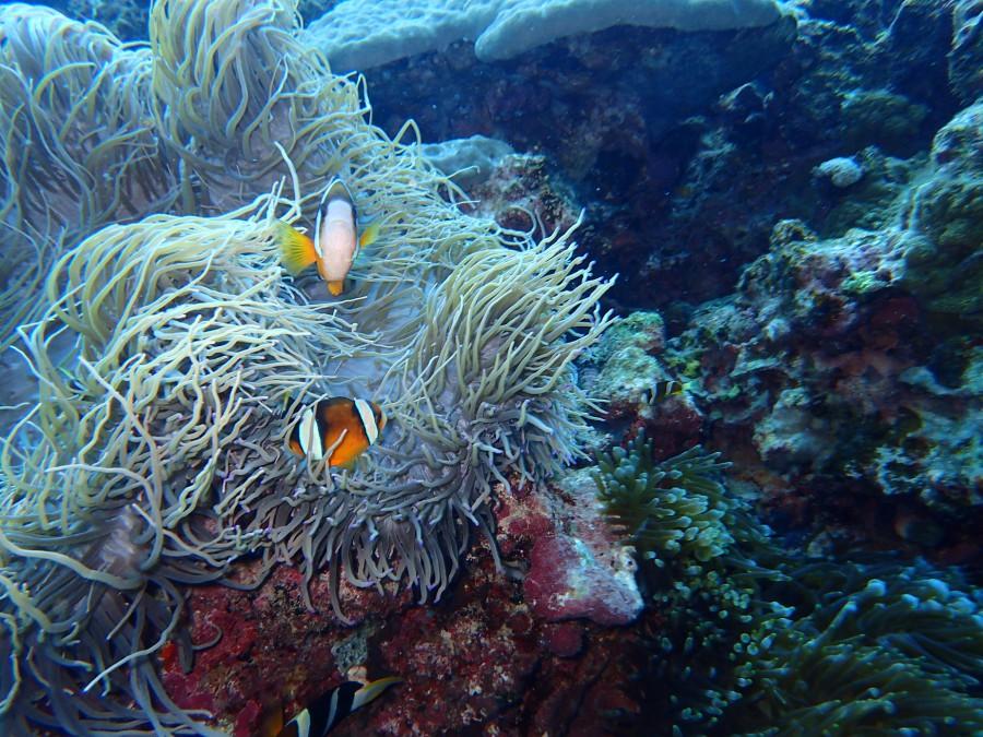 瀬底島ダイビング_47