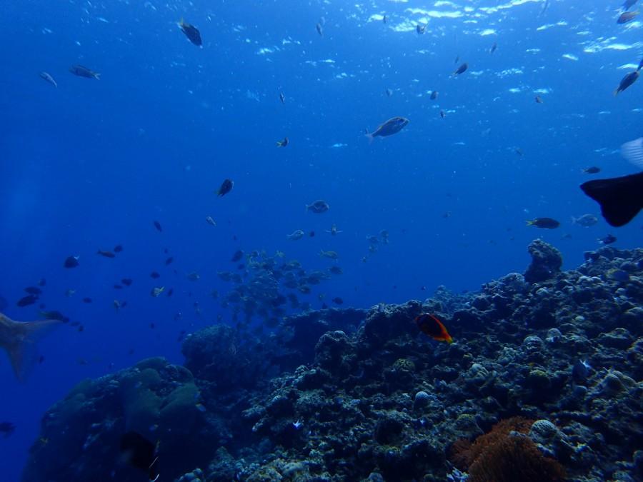 瀬底島ダイビング_55