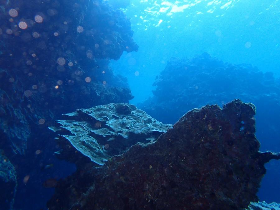 瀬底島ダイビング_18