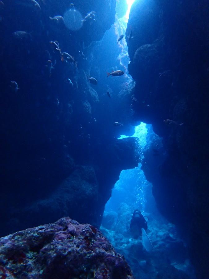 瀬底島ダイビング_22