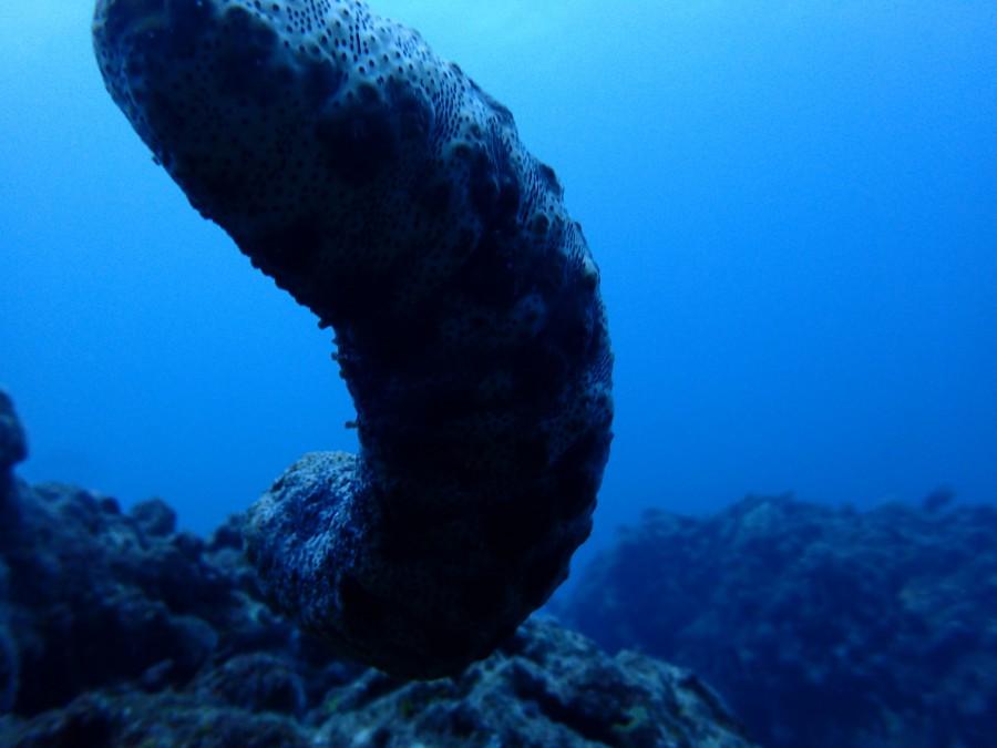 瀬底島ダイビング_91