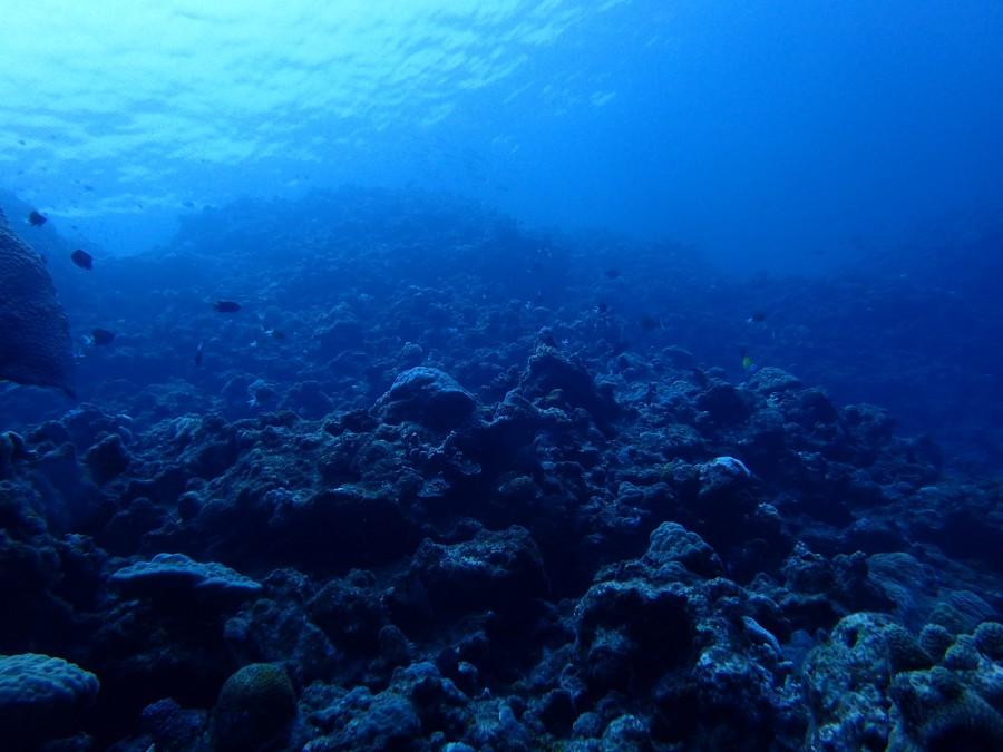 瀬底島ダイビング_72