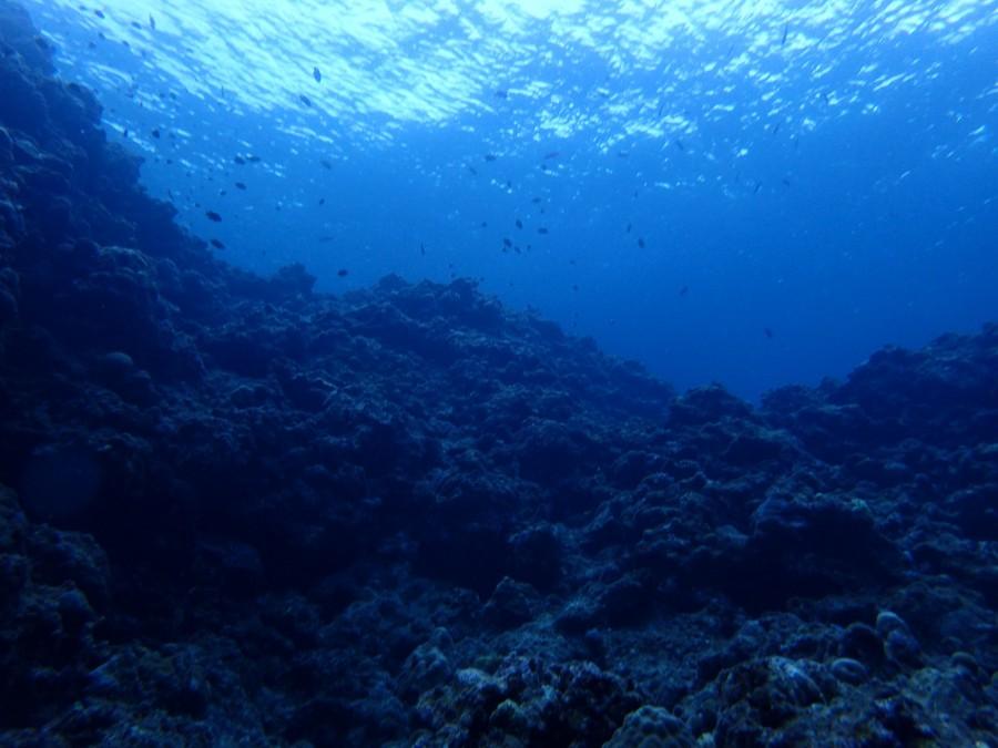 瀬底島ダイビング_32