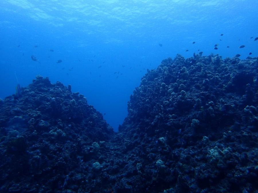 瀬底島ダイビング_116