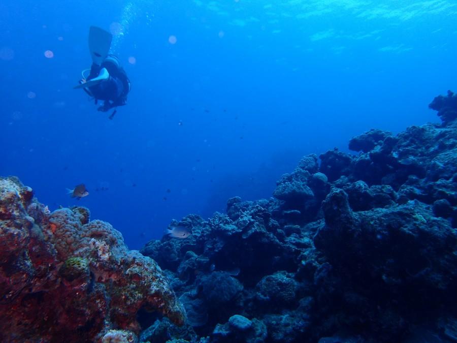 瀬底島ダイビング_75