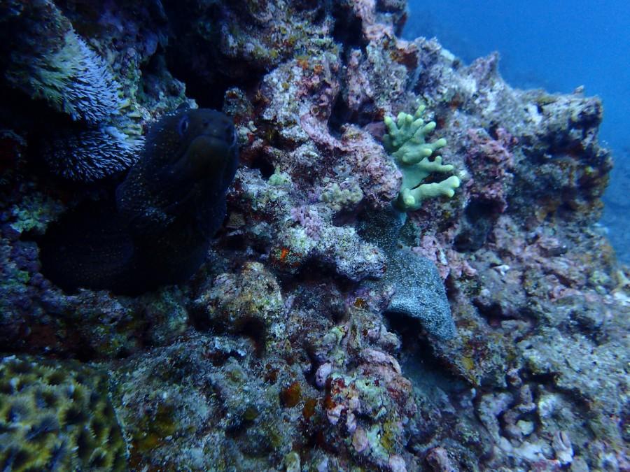 瀬底島ダイビング_93