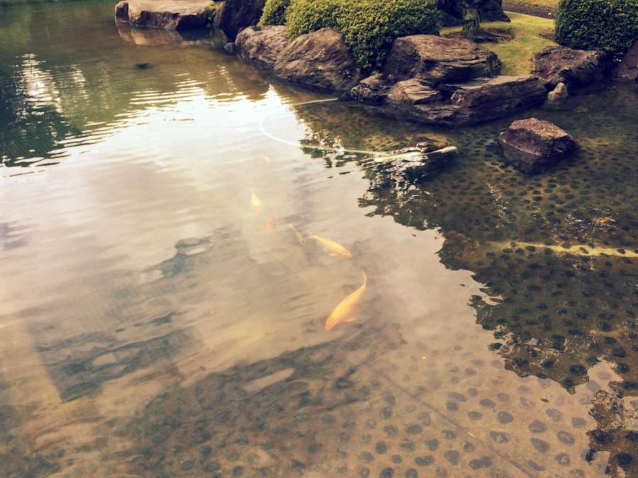 大濠公園日本庭園_11