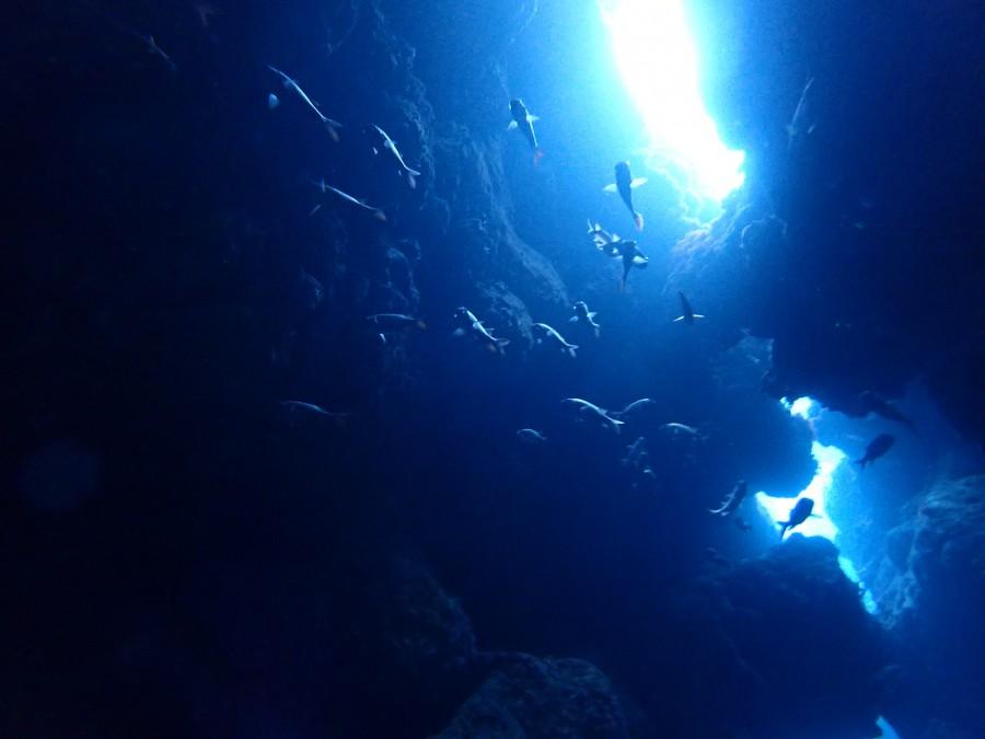 瀬底島ダイビング_23