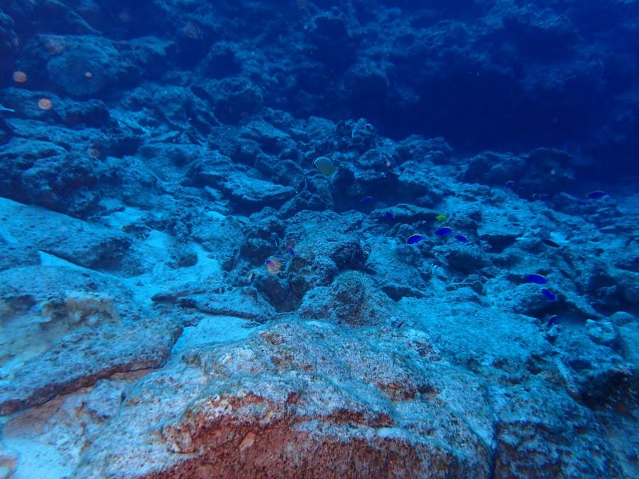 瀬底島ダイビング_09
