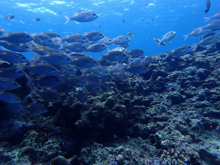 瀬底島ダイビング_59