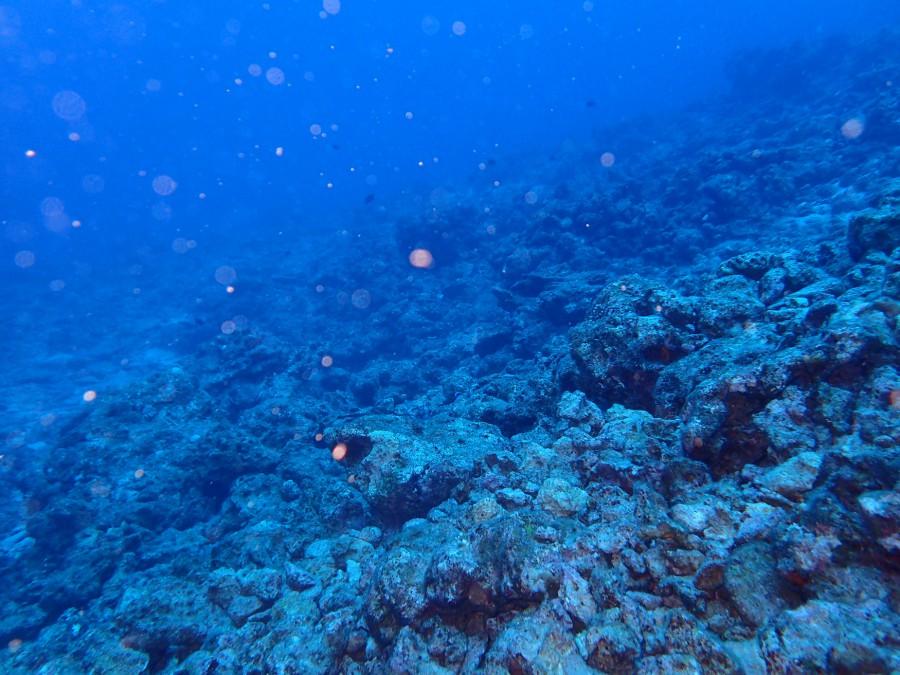 瀬底島ダイビング_05