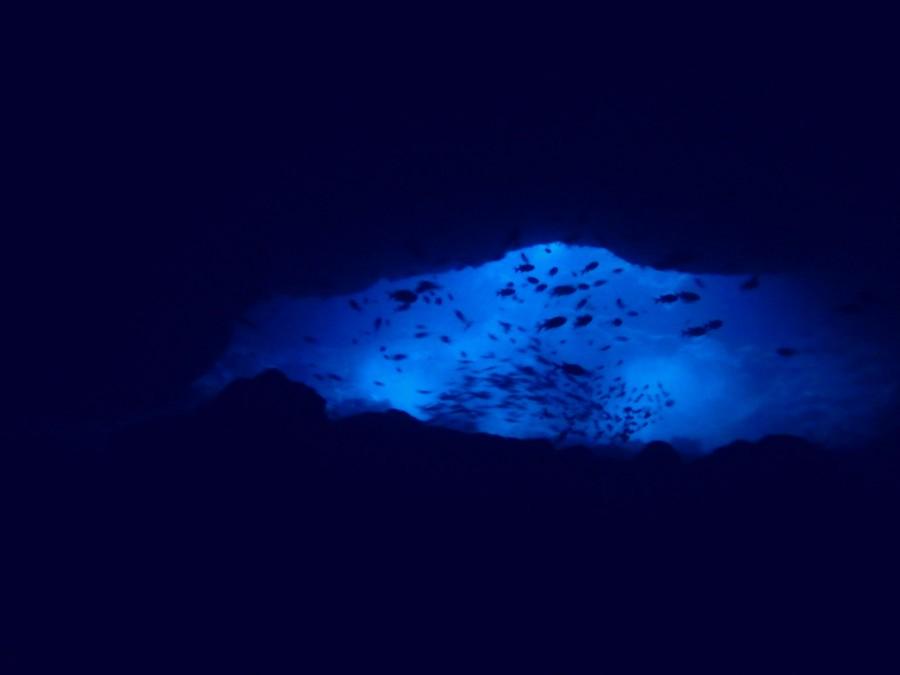 宮古島ダイビングサンゴホール_05