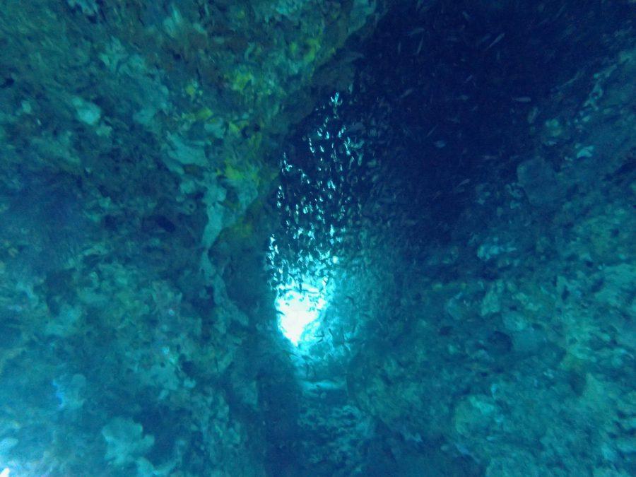 セブダイビングオランゴ島_09