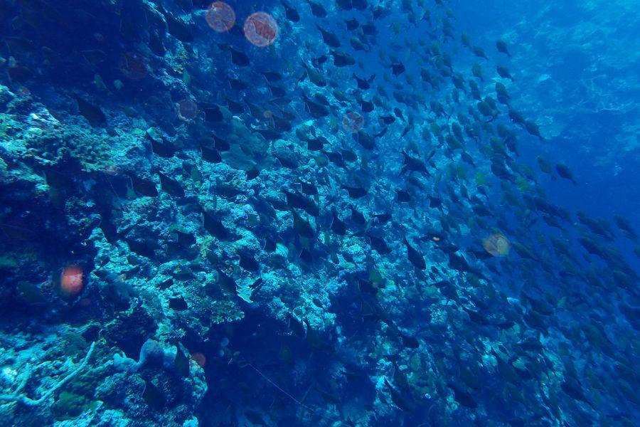 ヒルトゥガン島ダイビング_29