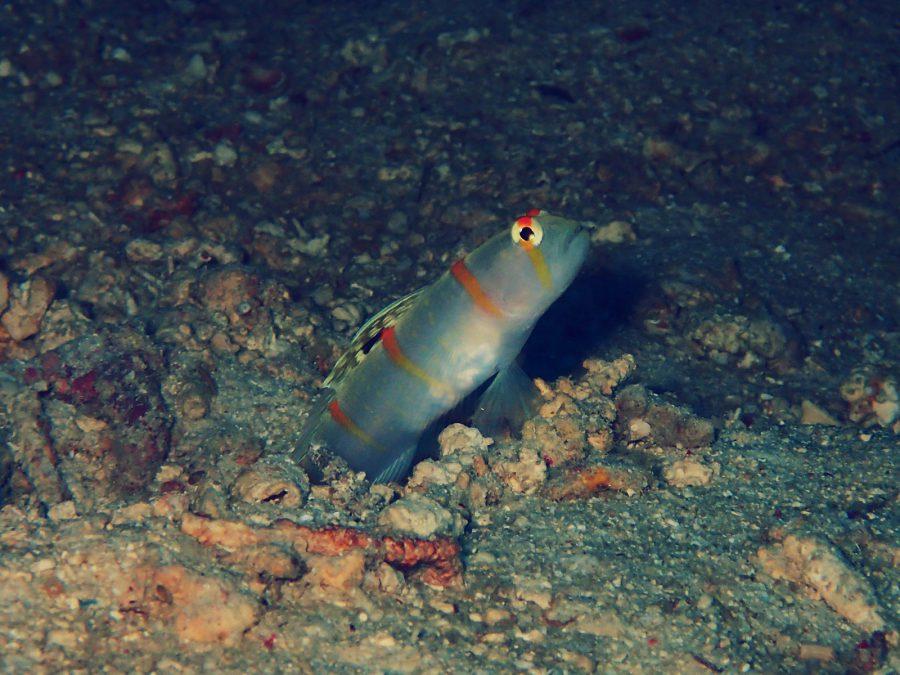 ヒルトゥガン島ダイビング_20