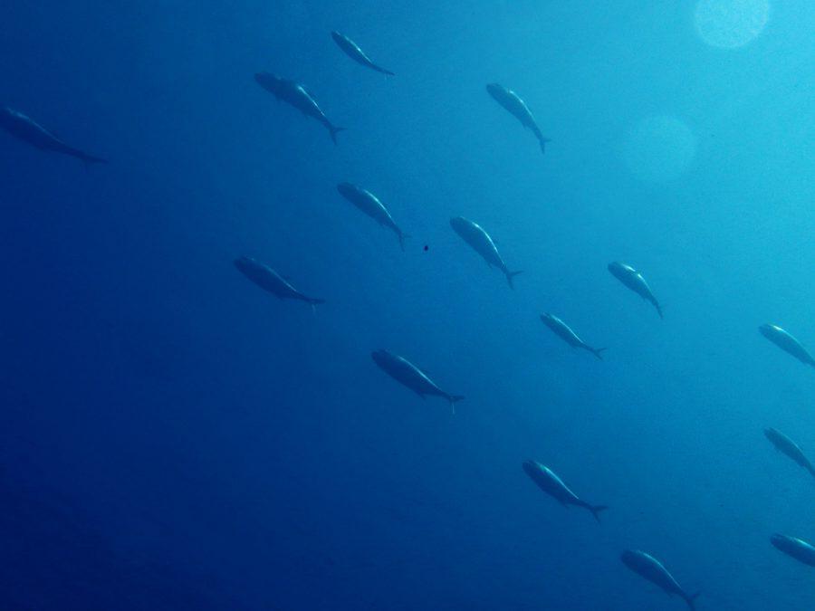 ヒルトゥガン島ダイビング_11