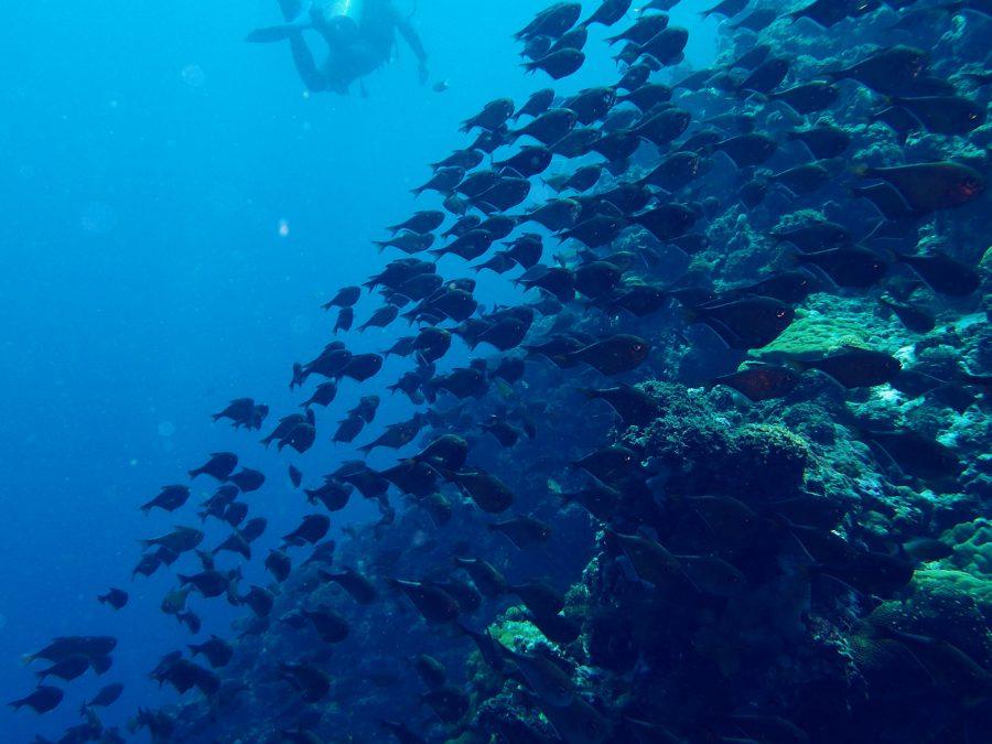 ヒルトゥガン島ダイビング_30
