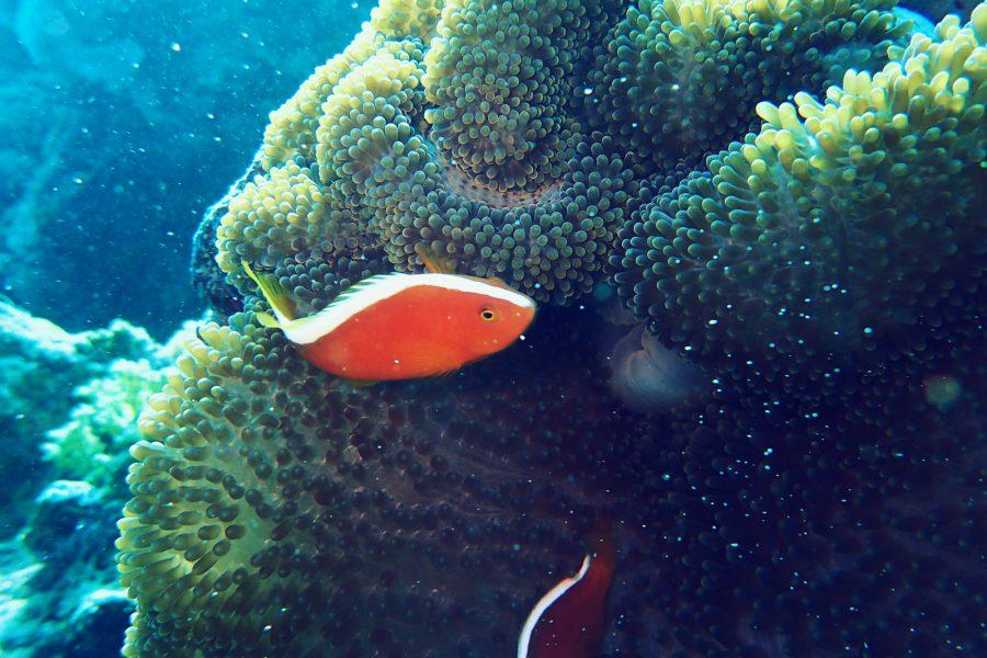 ヒルトゥガン島ダイビング_03
