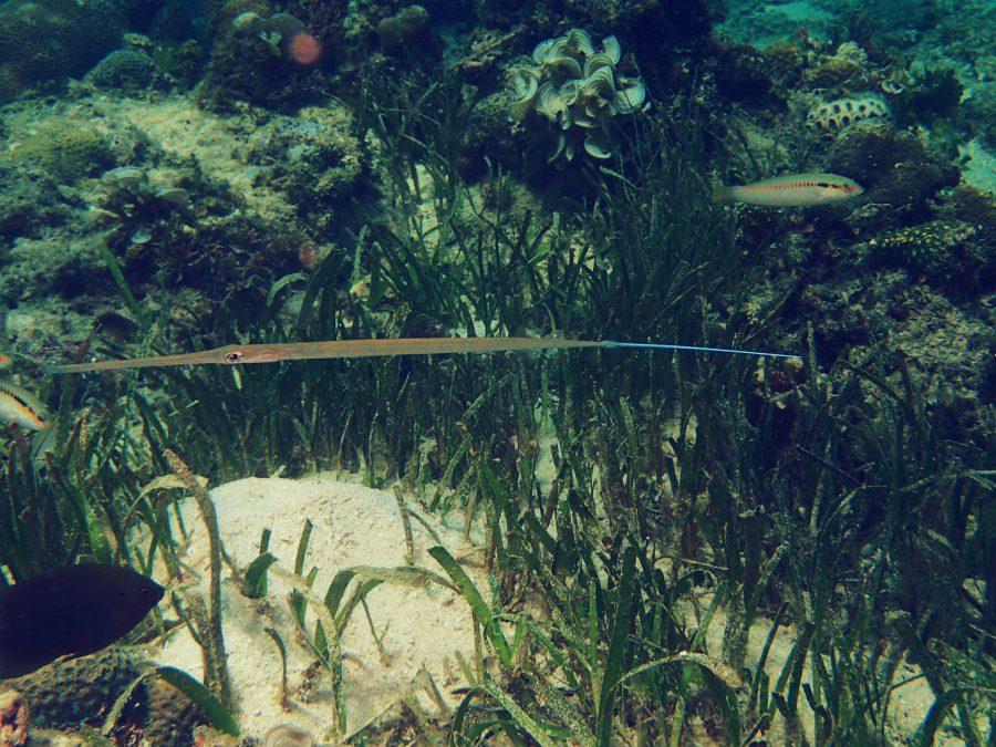 ヒルトゥガン島ダイビング_36