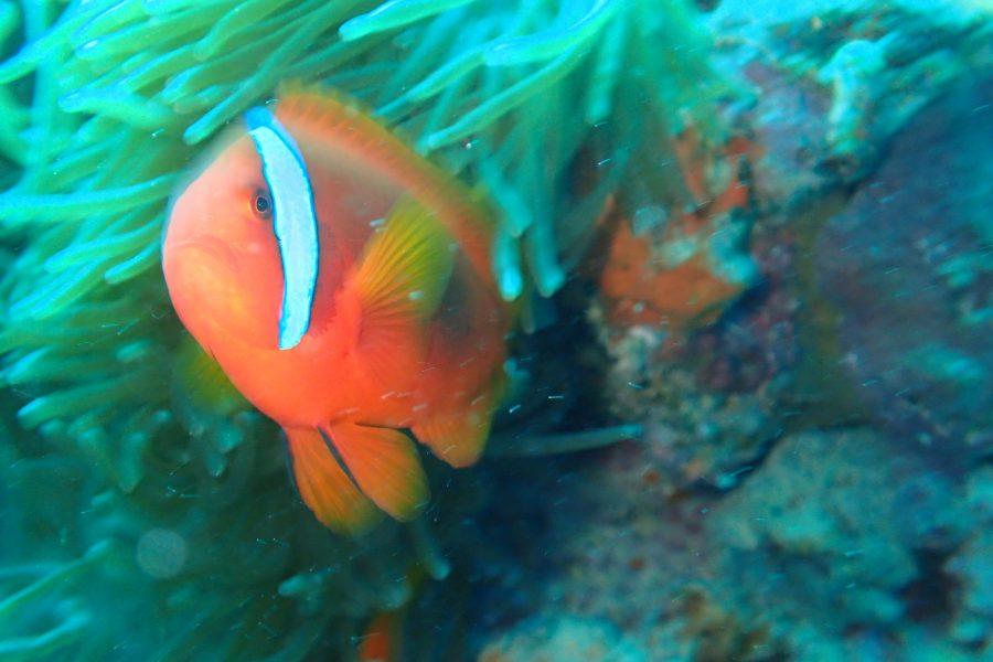 ヒルトゥガン島ダイビング_19