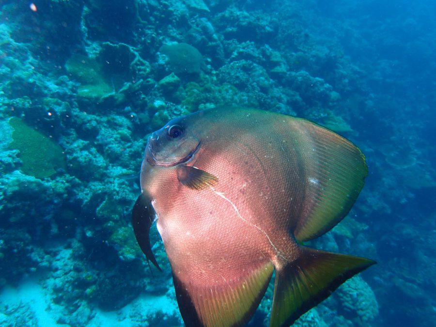 ヒルトゥガン島ダイビング_28