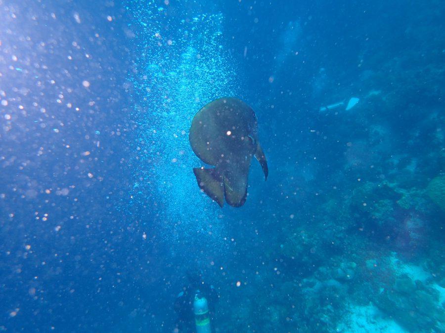 ヒルトゥガン島ダイビング_27