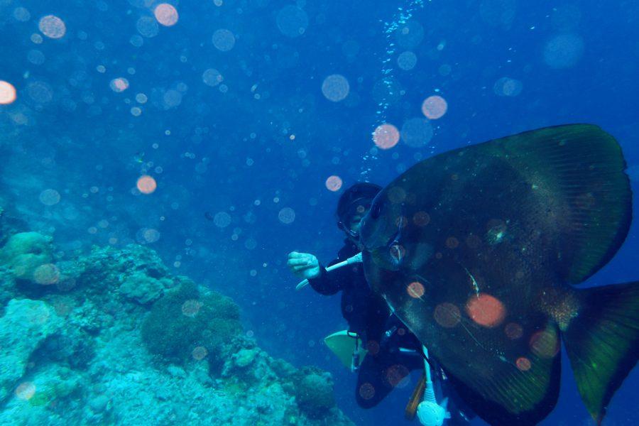 ヒルトゥガン島ダイビング_05