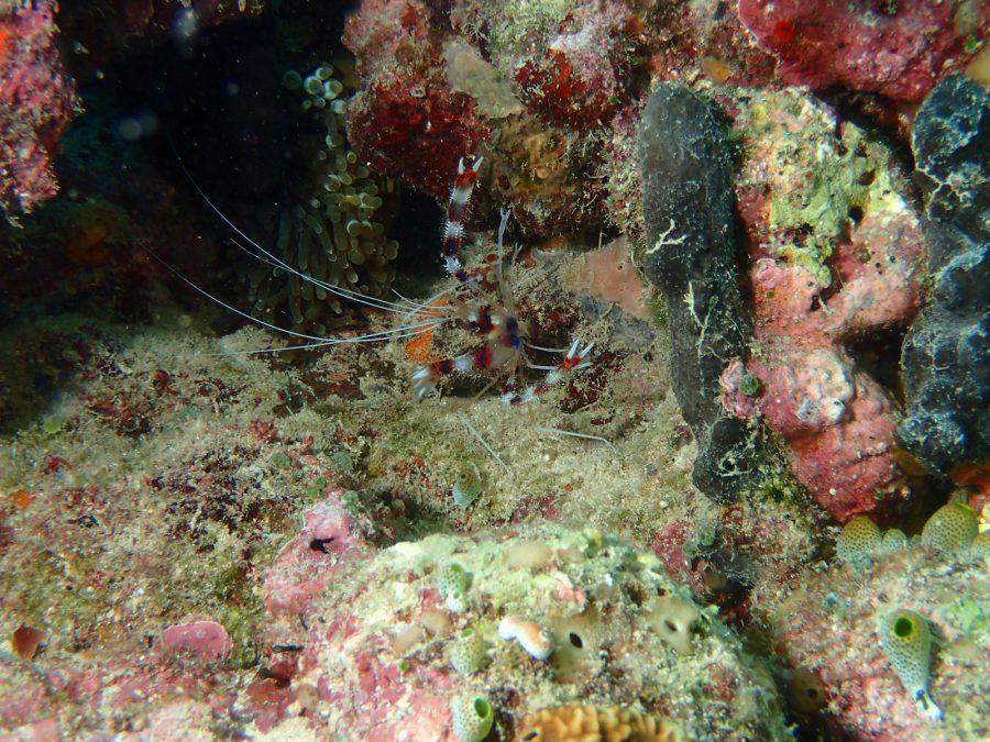 ヒルトゥガン島ダイビング_44
