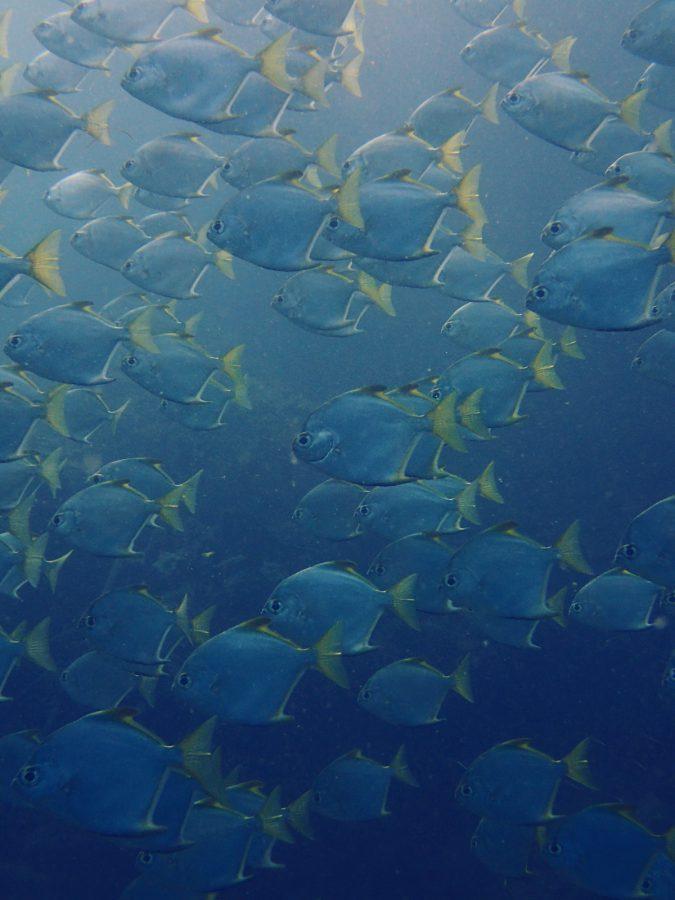 ヒルトゥガン島ダイビング_42