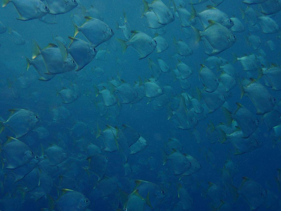 ヒルトゥガン島ダイビング_40