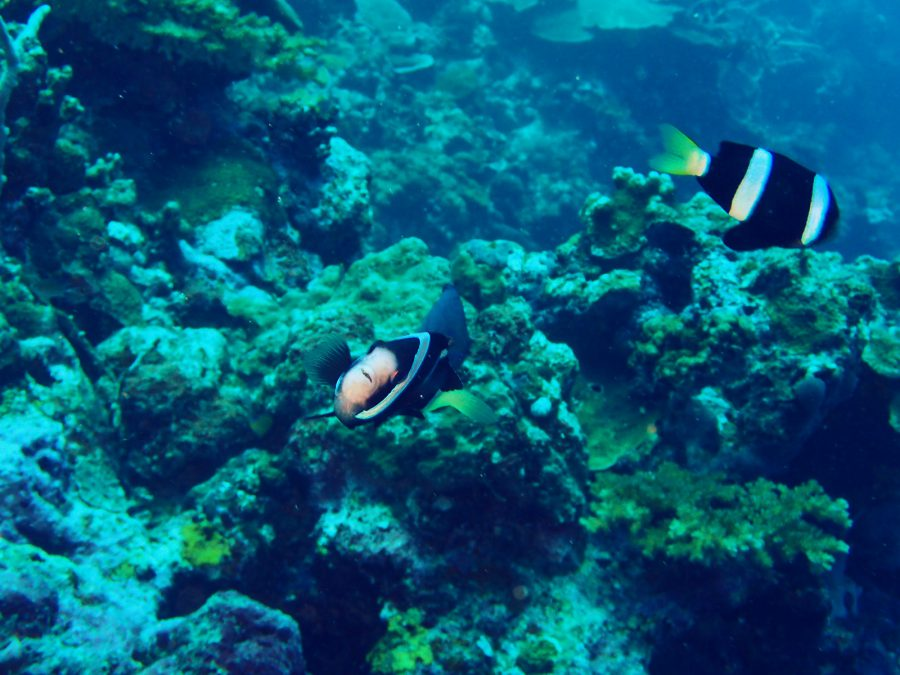ヒルトゥガン島ダイビング_21