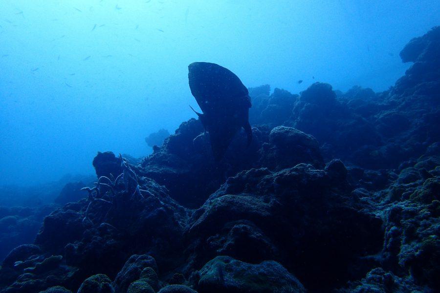 ヒルトゥガン島ダイビング_09