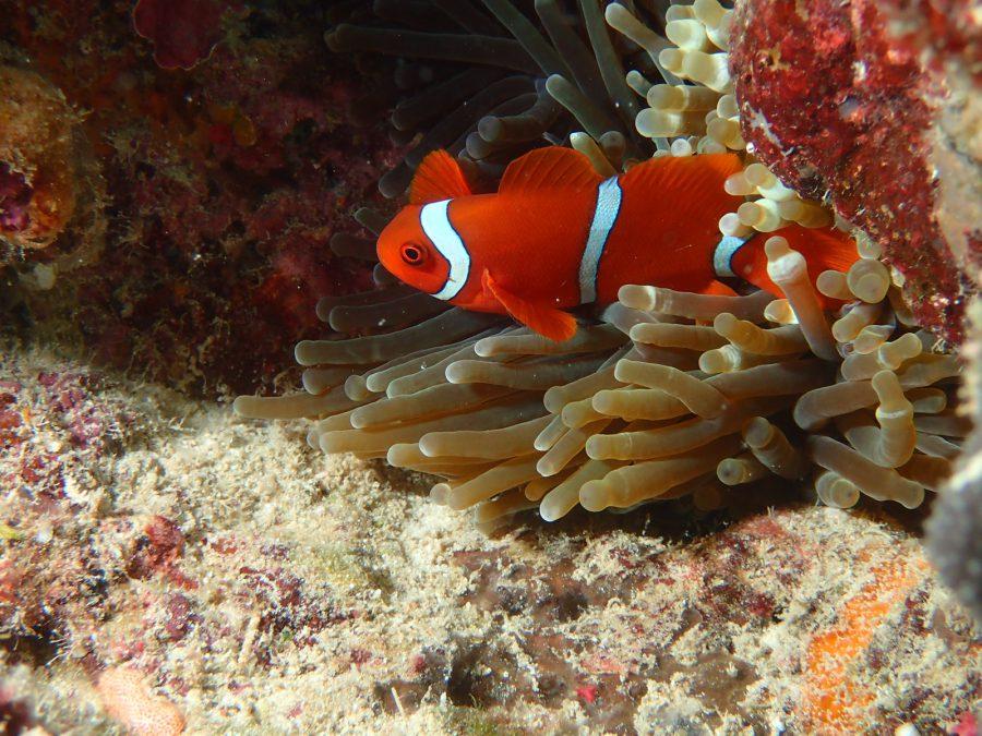 ヒルトゥガン島ダイビング_46