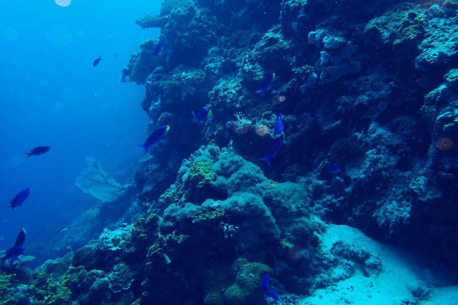 ヒルトゥガン島ダイビング_18
