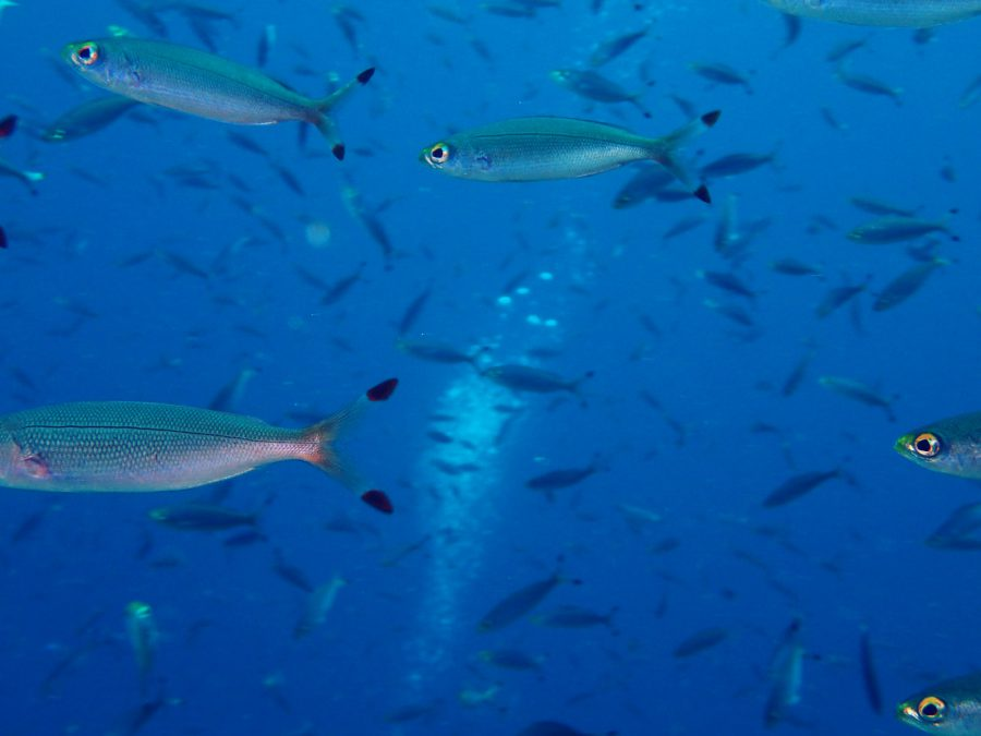 ヒルトゥガン島ダイビング_26