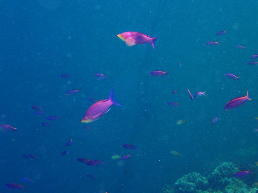 ヒルトゥガン島ダイビング_15