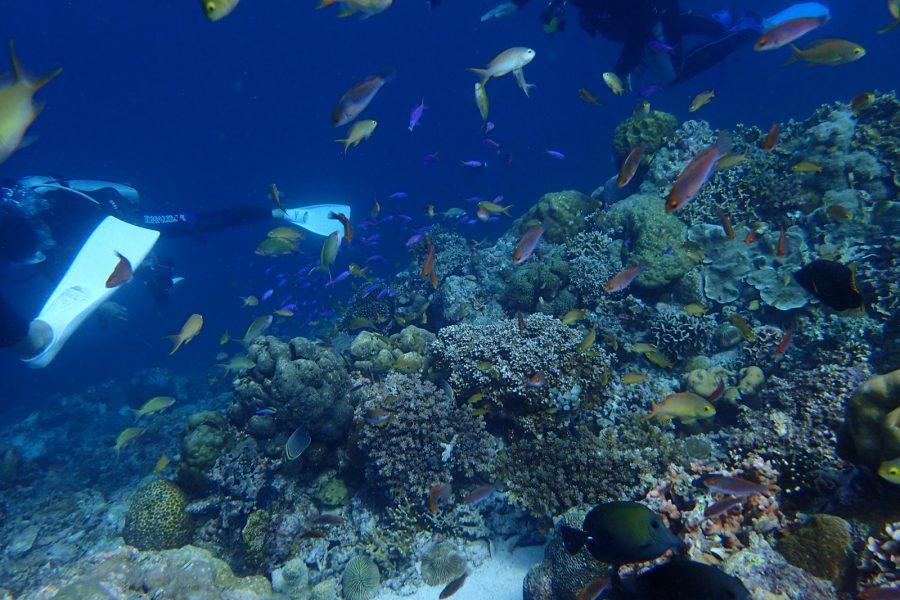 ヒルトゥガン島ダイビング_08