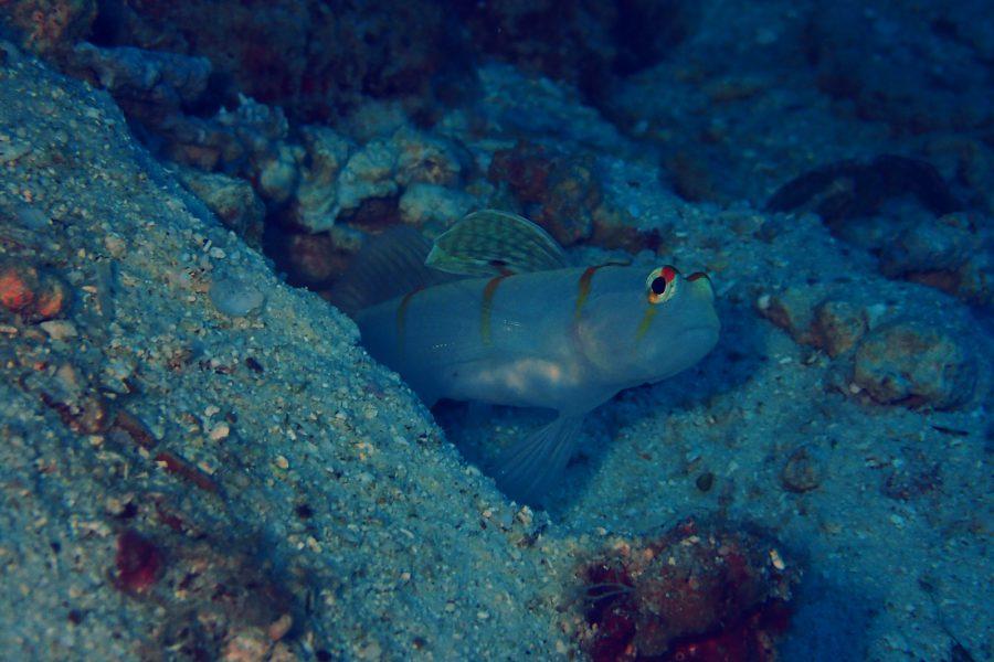 ヒルトゥガン島ダイビング_07