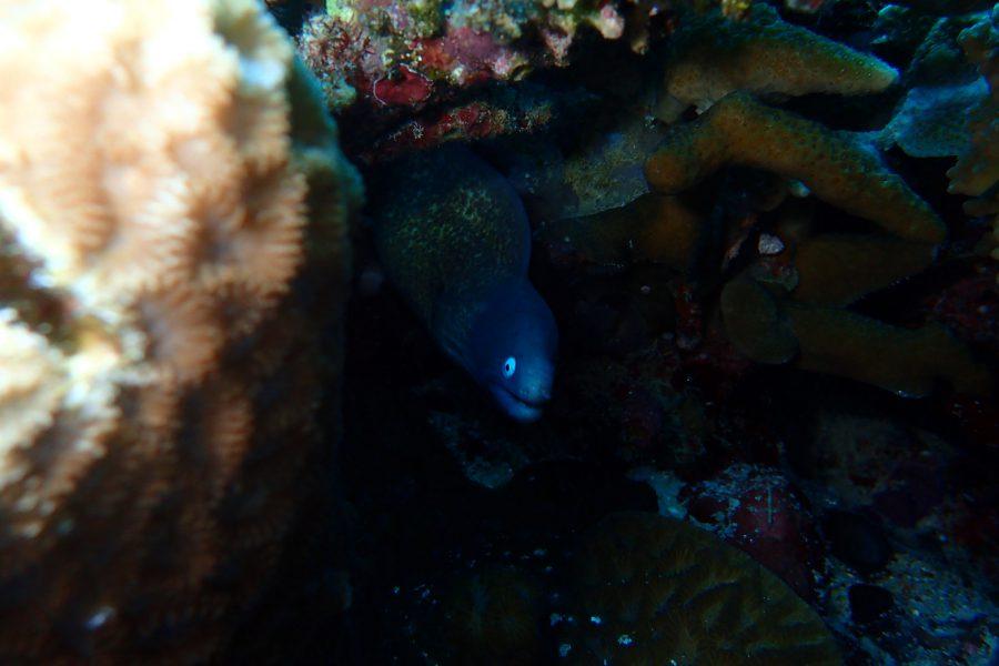 ヒルトゥガン島ダイビング_49