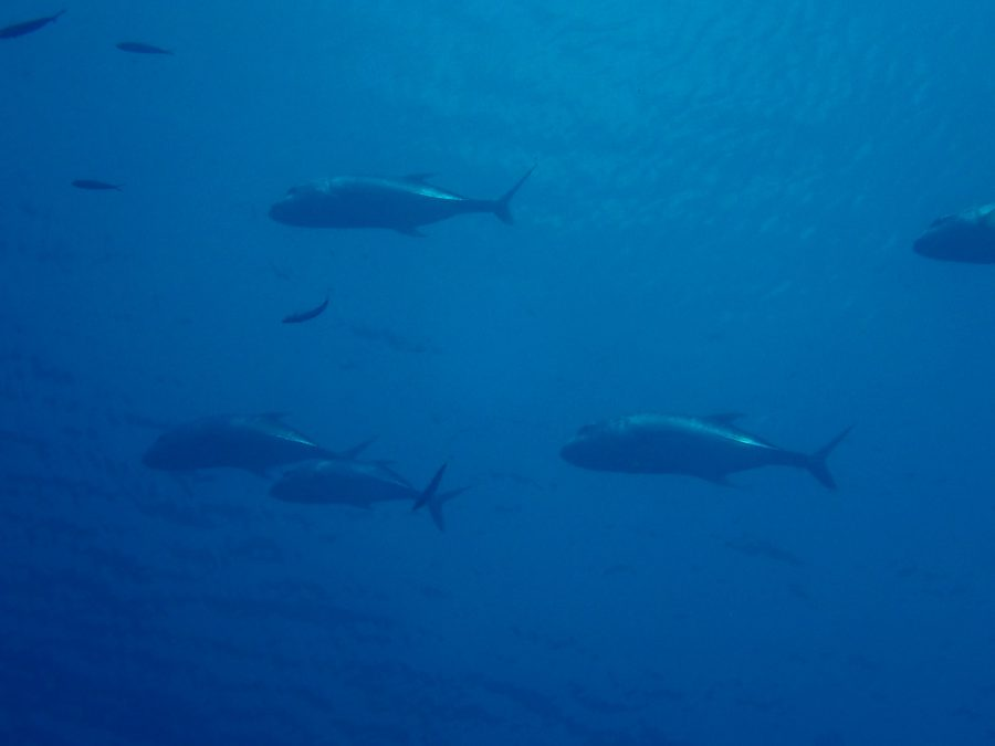 ヒルトゥガン島ダイビング_10