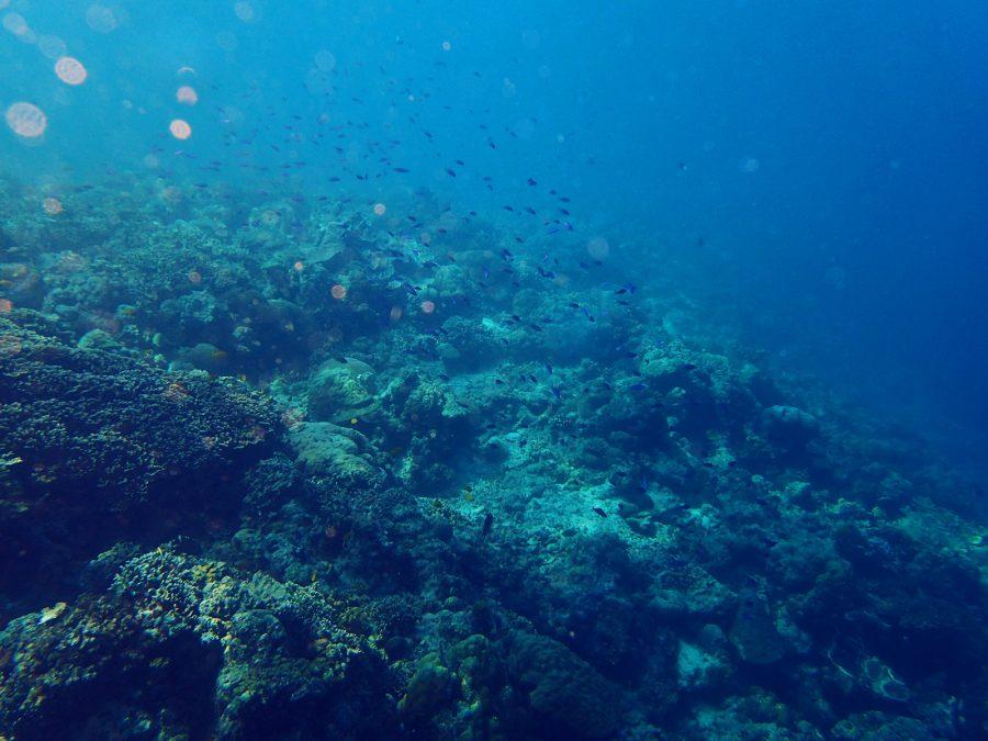 ヒルトゥガン島ダイビング_02