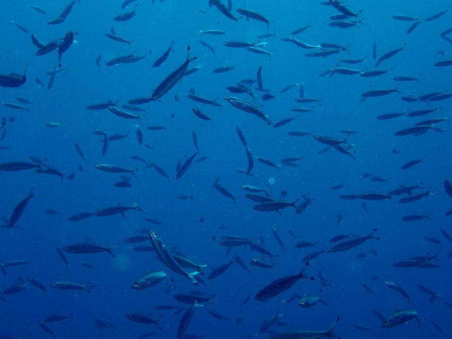 ヒルトゥガン島ダイビング_25