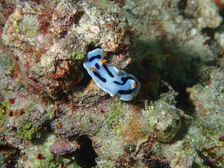 ヒルトゥガン島ダイビング_43
