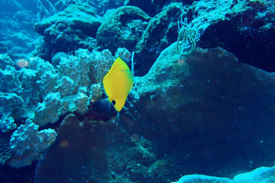 ヒルトゥガン島ダイビング_17