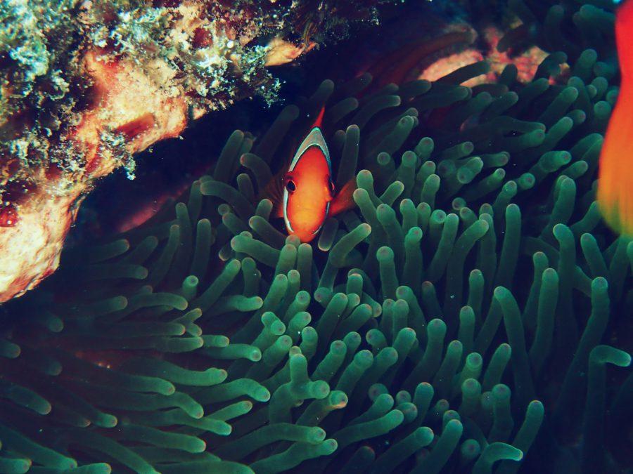ヒルトゥガン島ダイビング_31