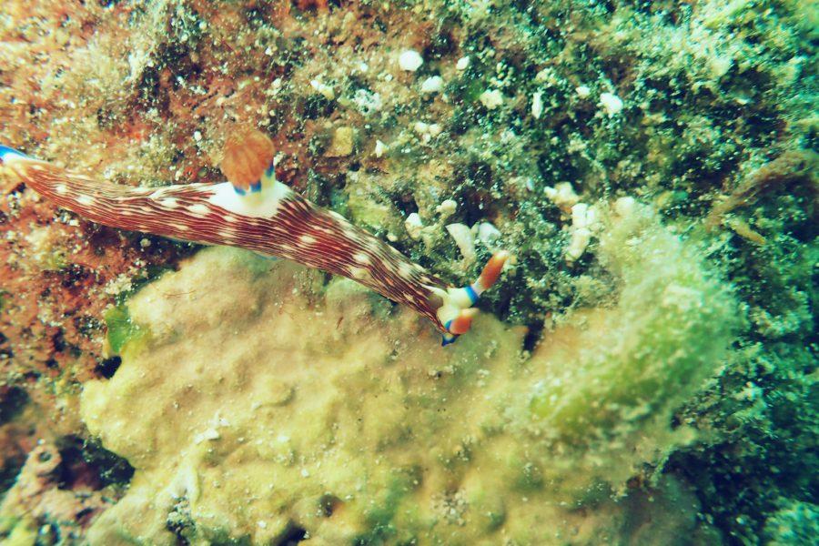 オランゴ島ダイビング_26