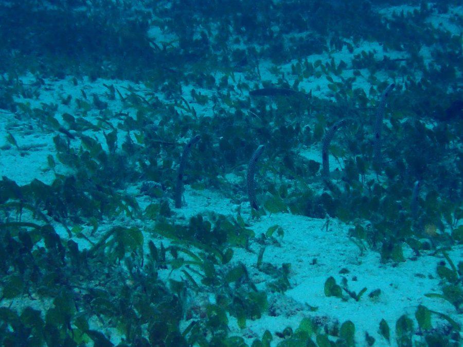 オランゴ島ダイビング_43
