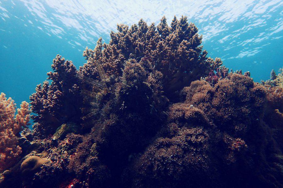 オランゴ島ダイビング_01