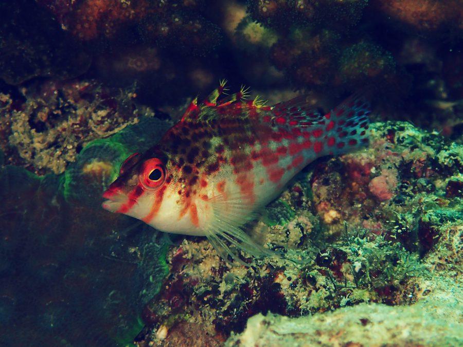 オランゴ島ダイビング_05